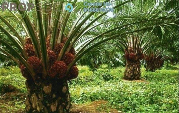 Land For Sale in Kota Tinggi, Johor Leasehold Unfurnished 0R/0B 108m