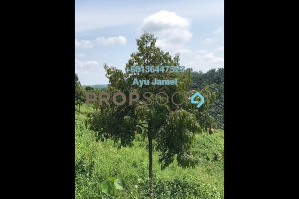 Land For Sale in Tras, Raub Freehold Unfurnished 0R/0B 4.77m