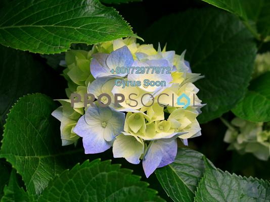 Hydrangeas rizdfzqtkp3krxlxprjc 4uozhpoe9 byyynos9fi small