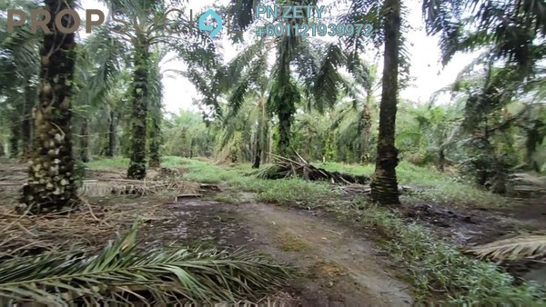 Land For Sale in CUBE Industrial Park Pontian, Pontian Freehold Semi Furnished 0R/0B 700k