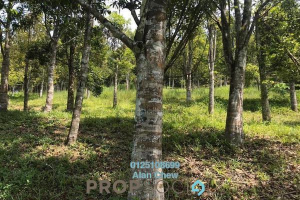 Land For Sale in Kampung Cinta Manis, Karak Freehold Unfurnished 0R/0B 1.25m