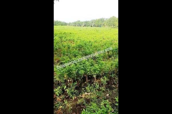 For Sale Land at Jenjarom, Selangor Freehold Unfurnished 0R/0B 890k