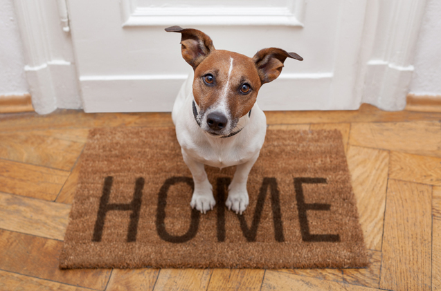 1 bring a dog home canine propsocial