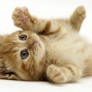 Cat 1 small