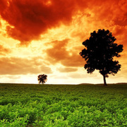 Hdr photography images green tree field small